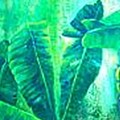 Banan Leaves 5 by Carol P Kingsley
