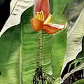 Banana Blossom by Alfred Ng