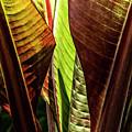 Banana Leaf Jungle by Brad Allen Fine Art