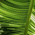Banana Leaf Structure by Brad Allen Fine Art
