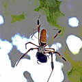 Banana Spider Lunch Time 1 by Bob Johnson