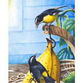 Bananaquits And Bananas by Christopher Cox
