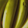 Bananas by Fanny Diaz