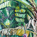 Bananas by Karin  Dawn Kelshall- Best