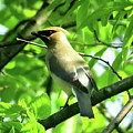 Bandit Bird by Linda Stern
