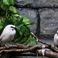 Bandit Birds by Douglas Barnett