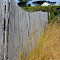 Bandon Beach Fence by Michele Avanti
