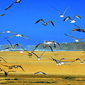 Bandon Gulls by Neal Itzkowitz