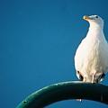 Bandon Seagull. by Spirit Vision Photography