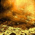 Banishing Rain Forest Shadows by Ian  MacDonald