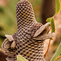 Banksia Cone 2 by Tania Read