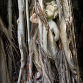 Banyan Grows Over Statue by Liesl Walsh