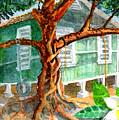 Banyan In The Backyard by Eric Samuelson