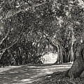 Banyan Street 3 by HH Photography of Florida