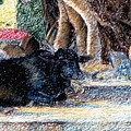 Banyan Tree Bull by Claudio  Fiori