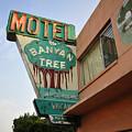 Banyan Tree Motel by David Lee Thompson