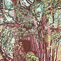 Baoba In Foliage by Valentine Magutsa