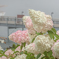 Bar Harbor Flowers In The Fog by Monica Hall
