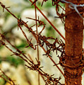 Barbed Wire Fence Closeup by Global Light Photography - Nicole Leffer