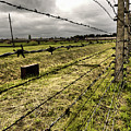 Barbed Wire Fence by Kelly Jenkins