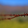 Barbed Wire Fencing 1 by Penny Haviland