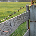 Barbed Wire by Lauri Novak