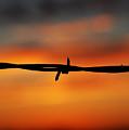 Barbwire Sunset by Kelly Wade