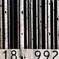 Barcode #19 by Scott Filipiak