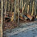 Bare Woods by Amanda Kessel