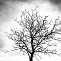 Bare Tree Against A Cloudy Sky by Carolyn Derstine