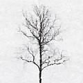 Bare Tree by Pekka Liukkonen