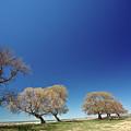 Bare Trees Along Shore Of Lake Manitoba by Mark Duffy