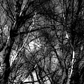 Bare Trees II by Donna Fonseca Newton