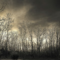 Bare Trees In A Winter Sunset by Jennifer Mitchell