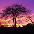 Bare Trees In Gorgeous Sunset by Jack Riordan