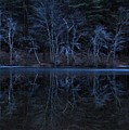 Bare Trees Reflected by Bill Driscoll