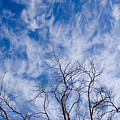 Bare Winter Branches In California by Julia Hiebaum