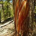 Bare Wood by Dan Dixon