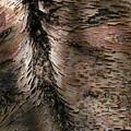 Bark At Woodstream Village by Dutch Bieber