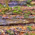 Bark Camp Creek Falls by Sam Davis Johnson