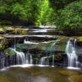 Bark Creek #1 by Sam Davis Johnson