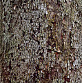 Bark by Karen Adams