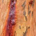 Bark Kc05 by Werner Padarin