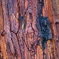 Bark Nnp02 by Werner Padarin