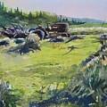 Barley Harvest by Spencer Meagher