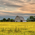 Barm In A Yellow Field by Larry Braun