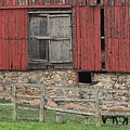 Barn And Sheep by G Berry