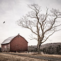 barn and tree - New York State by Gary Heller