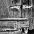 Barn Cats by Pete Hellmann