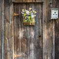 Barn Door by Guy Whiteley